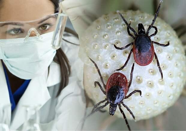 Инфекционист указала на главные признаки инфекционного энцефалита