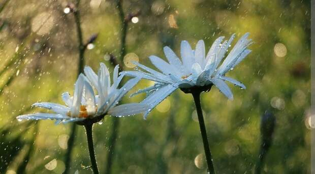 В воскресенье в Крыму до 26 градусов тепла, сильные ливни