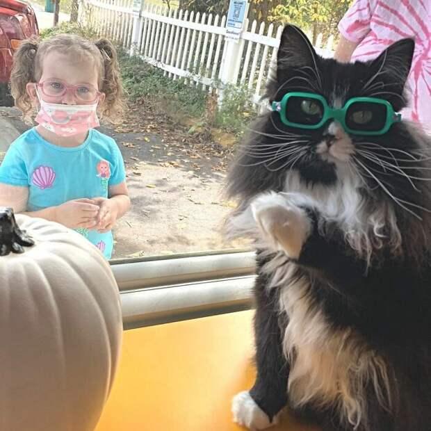Кот Трюфель учит малышей не стесняться очков