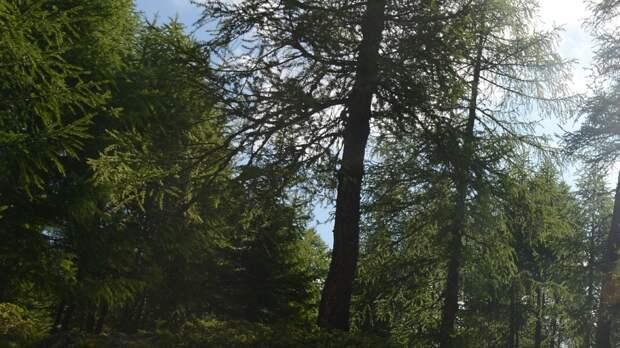 Заблудившуюся в лесу под Тверью девочку нашли спасатели