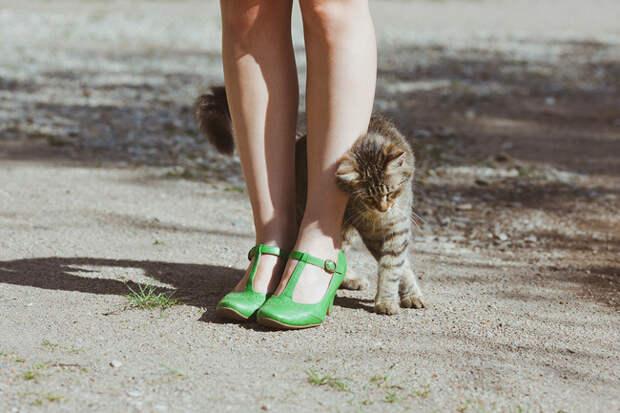 кошачье проявление любви (10)