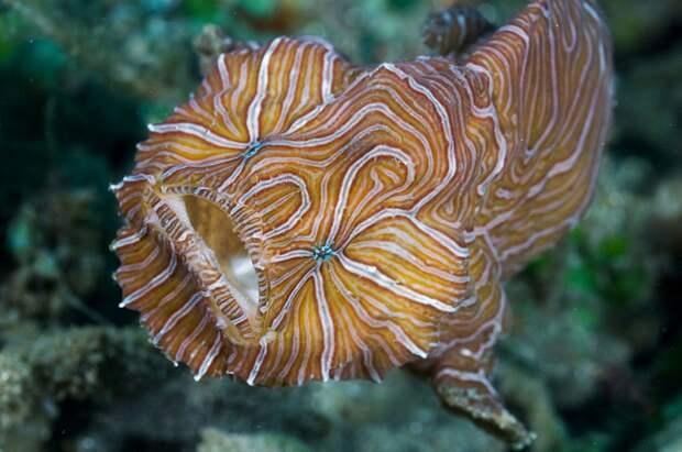 prichudlivieribi 2 10 самых причудливых рыб мирового океана