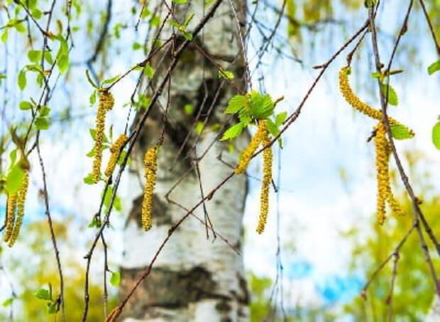 11 апреля - Народный праздник Берещенье.