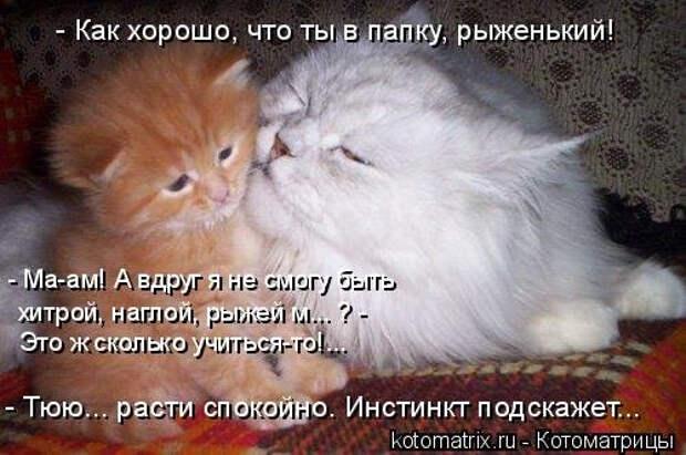 1556890812_kotomatricy-19 (500x332, 143Kb)