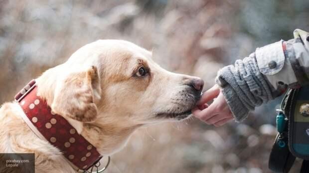 Трогательная реакция собак на возвращение хозяина попала на видео