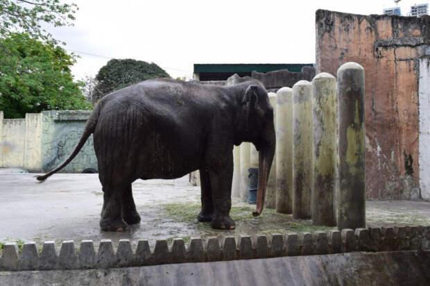 История самого печального в мире слона… Она живёт в одиночку вот уже 35 лет!