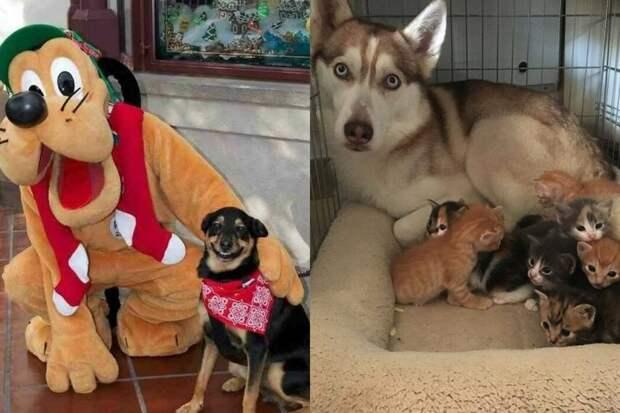 10+ фото собак, которые зарядят вас ударной дозой серотонина на неделю