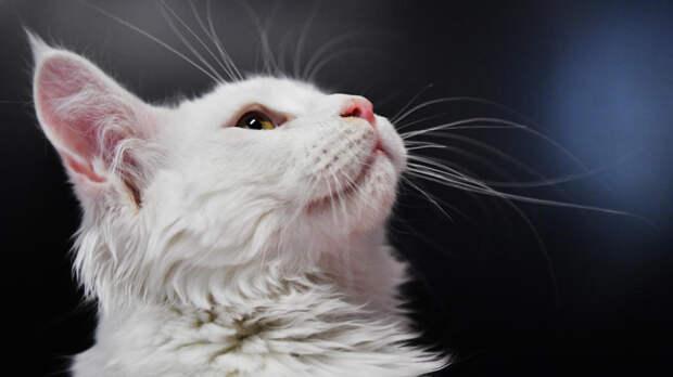 Кот сбежал из багажного отсека самолета, загоняв сотрудников аэропорта