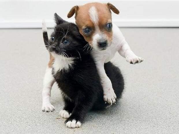 Щенок и котёнок рядом