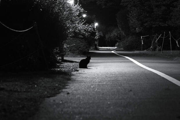 Night appearance by Mayuki Kawasumi on 500px.com