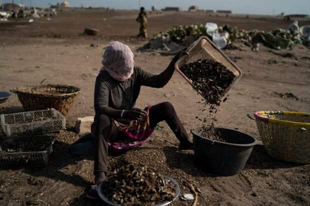 Из-за коронавируса сенегальские женщины находят новуюнадежду в рыбной ловле