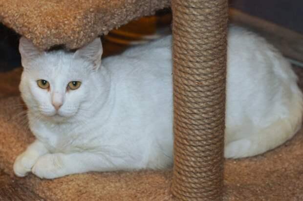 Уютная кошечка с грустными глазками в поисках добрых хозяев и дома!