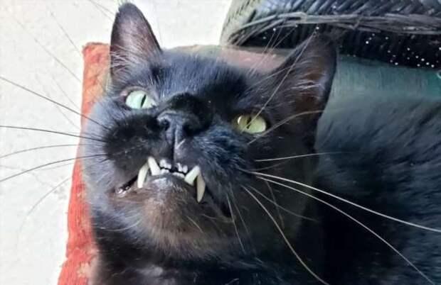 20 человек, которые пытались сделать милое фото своего кота и опять потерпели фиаско