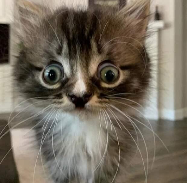 Особенный котенок смотрит на мир странными глазками, но это не мешает ему быть жизнелюбом