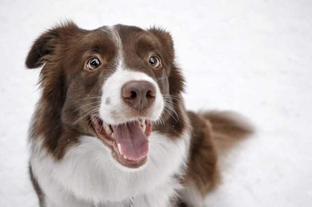 Турецкие эксперты расшифровали смысл странных привычек собак
