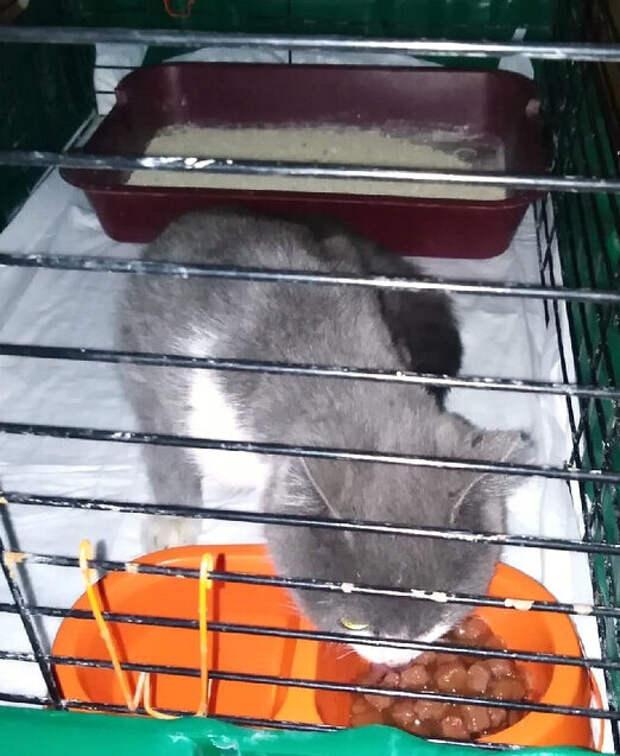 Первое время Женька провел в карантинной клетке.