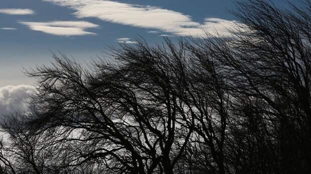 В Ростове-на-Дону предупредили об усилении ветра до 20 м/с