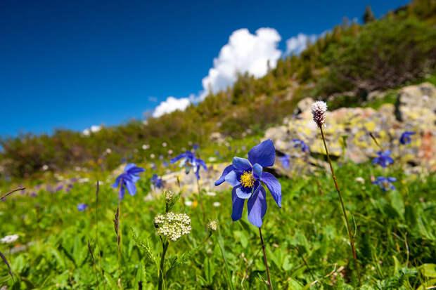 Синий цветок.