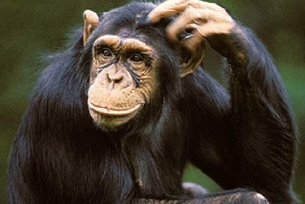 Необычайные интеллектуальные способности животных