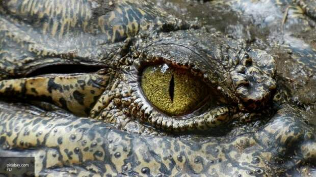 Жители села Оренбургской области нашли в лесу труп крокодила