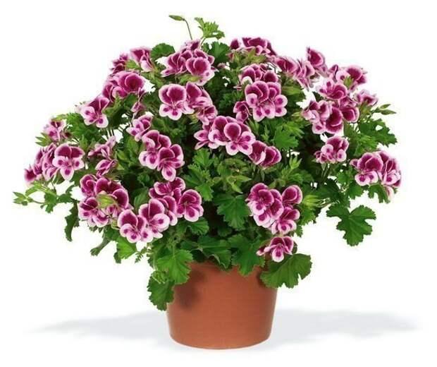 12 супер-эффективных способов удобрить домашние растения.