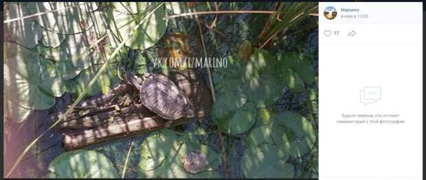 Фото дня: В Марьине завелись черепахи