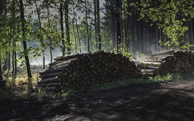 Житель Краснодарского края вырубил лес на 25 миллионов рублей