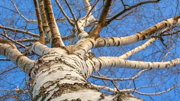 Спасатели сняли с дерева ребенка в Череповце