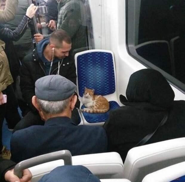 Обычный автобус в Турции животные, коты, смешные картинки, юмор