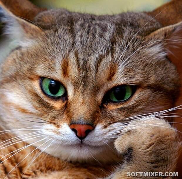 Некоторые факты о кошачьих рекордах