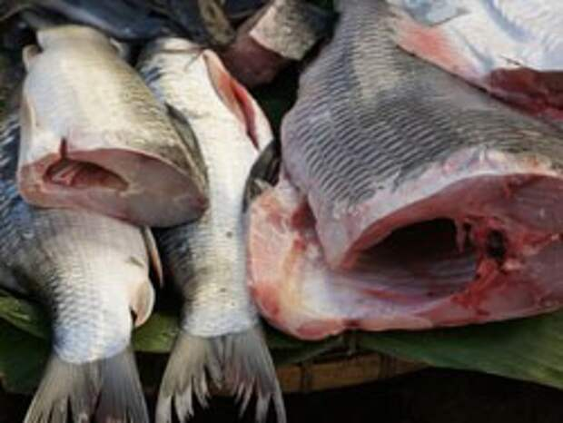 Блюда из рыбы рецепты CEVICHE — Рецепты Джейми Оливера