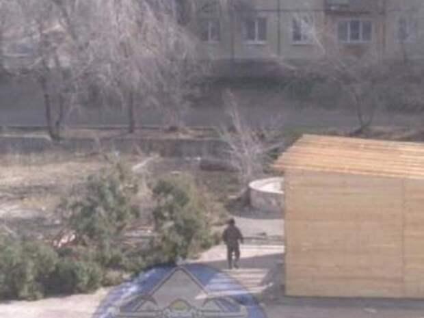 Сосны спиливают в Сосновом бору в Чите