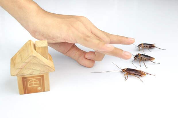 Как избавиться от тараканов: обзор всех доступных средств