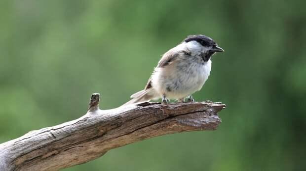 Екатеринбуржец освободил запутавшуюся в леске птицу