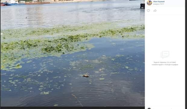 Роспотребнадзор выяснит причину гибели уток в парке «Северное Тушино»