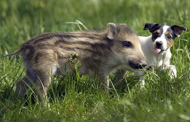 7 милых фотографий песиков, которые дружат с другими животными