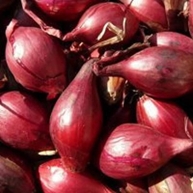 Лук в уксусе + салат из лука — Рецепты Джейми Оливера