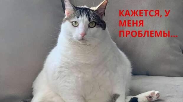 """Из-за ожирения у кошки возникла """"неприличная"""" проблема. Врач решил её, но никто не думал, что это будет так смешно"""
