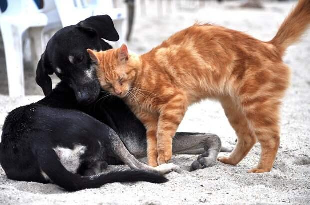 В Удмуртии бездомных животных «отдадут в руки» муниципалитетам