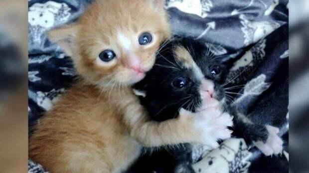 В течение нескольких дней, обнимающиеся котята, изо всех сил старались выжить на улице