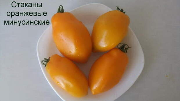 Томат сорт 'Стаканы оранжевые минусинские' фото сайта sadik45.ru