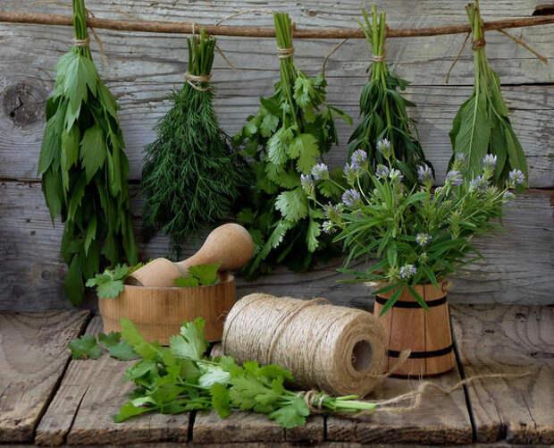 Петрушка, укроп, сельдерей – способы заготовки зелени на зиму