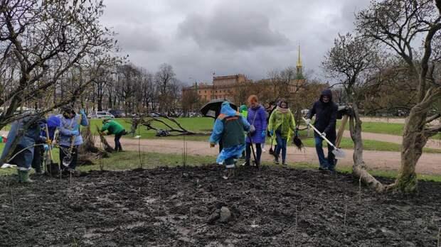 В Смольном подвели итоги первой акции совместного с горожанами озеленения улиц