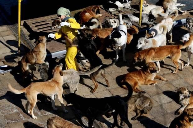 Вафа — приют для животных в Иране