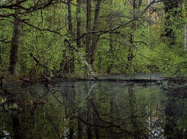 Фото Сергея Странника - апрель 2
