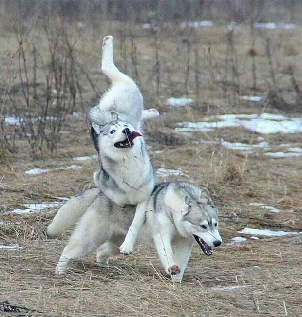 Фото собак, которые вас рассмешат – но вам будет совестно, что вы над ними смеялись собаки, щенки. юмор
