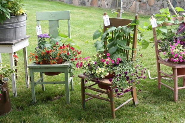 Клумбы на стульях повысят креативность участка на несколько позиций. /Фото: live.staticflickr.com