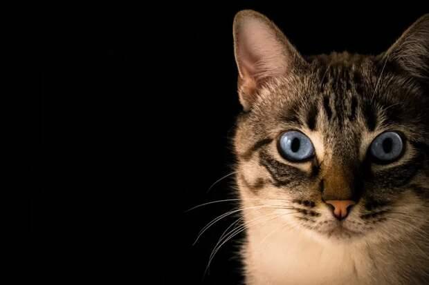 Может ли кошка предчувствовать смерть человека