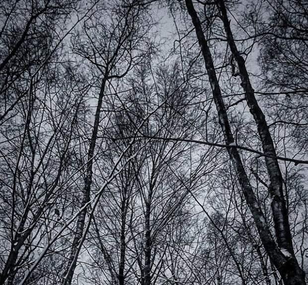 Фото дня: прогулка по Щукинскому парку