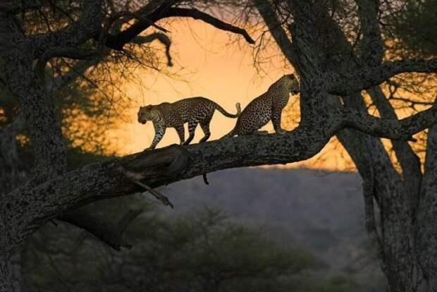Великолепные моменты из мира животных (60 фото)